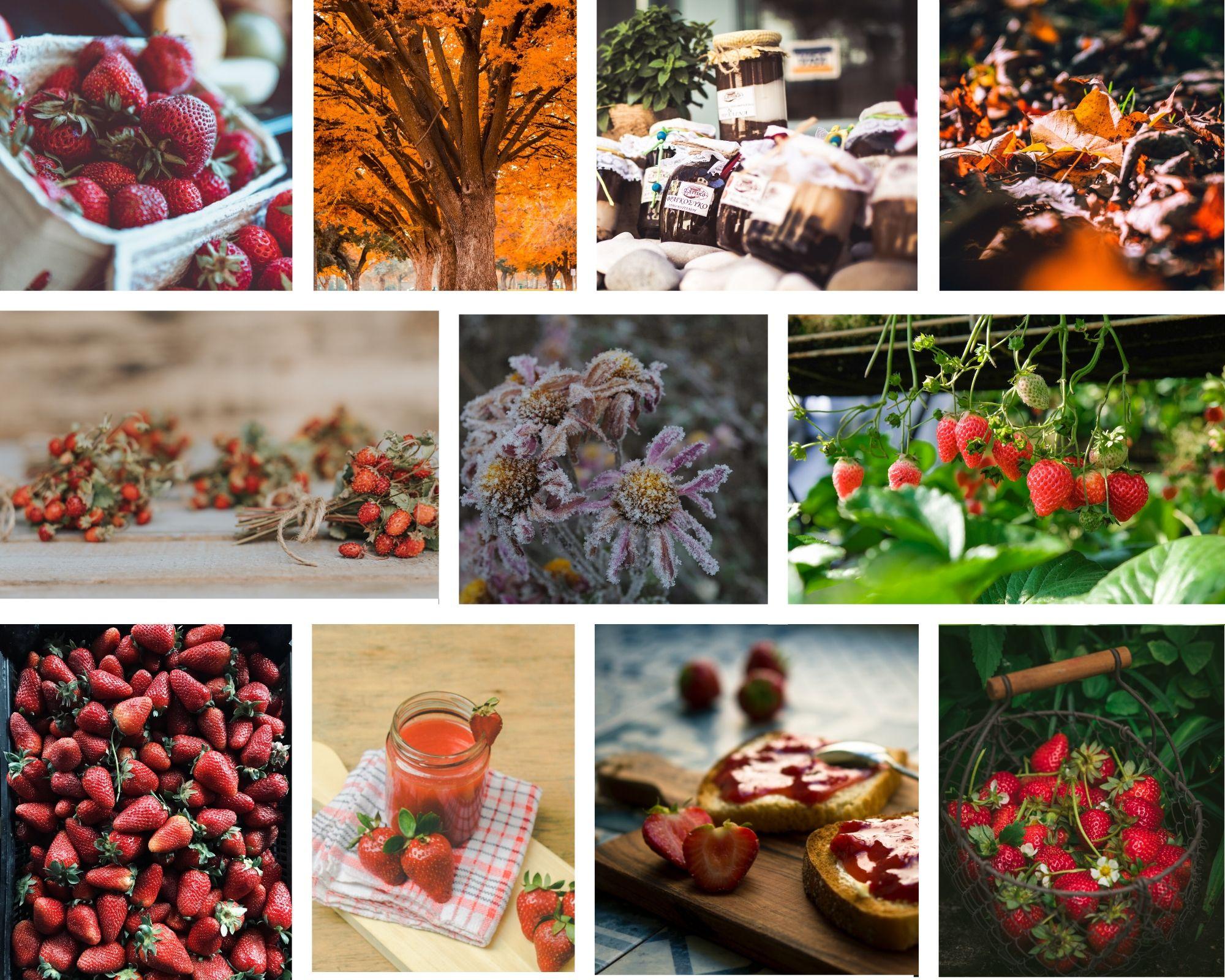 Bildkollage Erdbeeren im Herbst