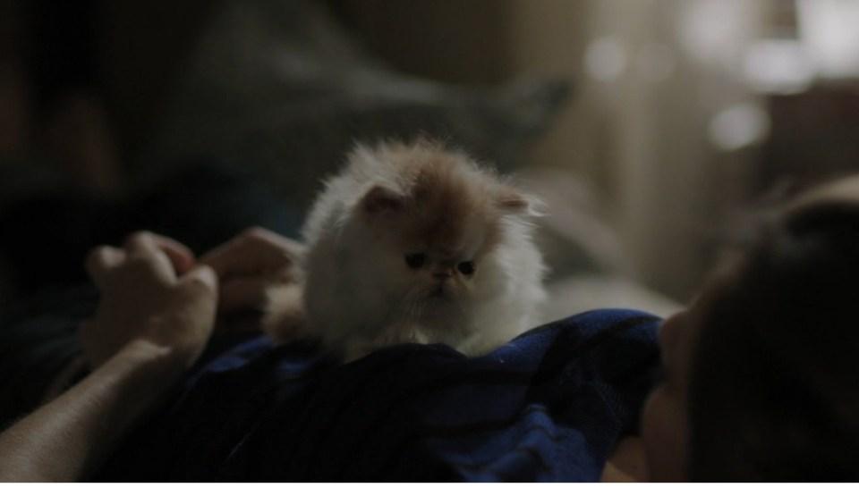 mačkica