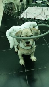 Blind dog head protection