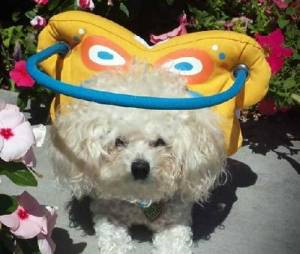 Muffin's Halo Butterfly