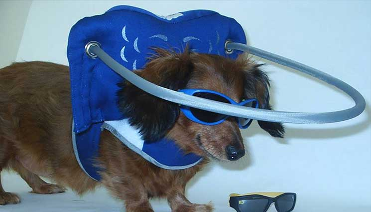 blue-angel-wings-blind-dog-product