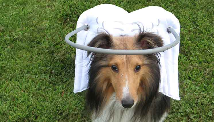 white-angle-wings-blind-dog-aid