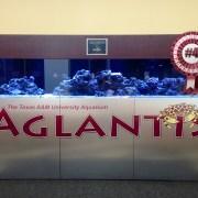 MSC's Aglantis Declared Fourth Largest Aquarium in College Station