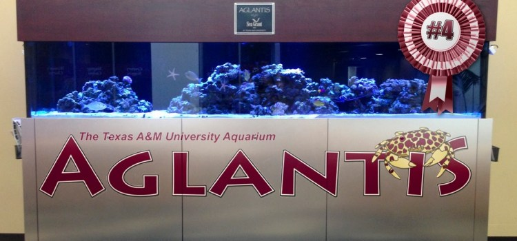 MSC's Aglantis Declared Fourth Largest Aquarium in College Station