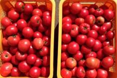 桃太郎(赤):言わずと知れたトマトの王様。