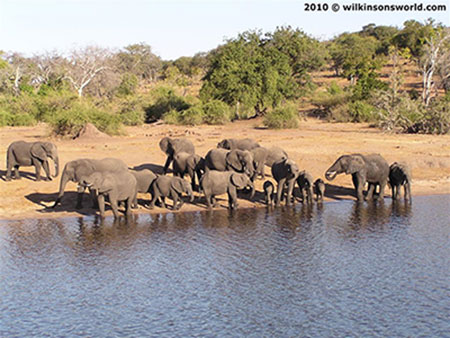Tourism in Africa: Chobe National Park