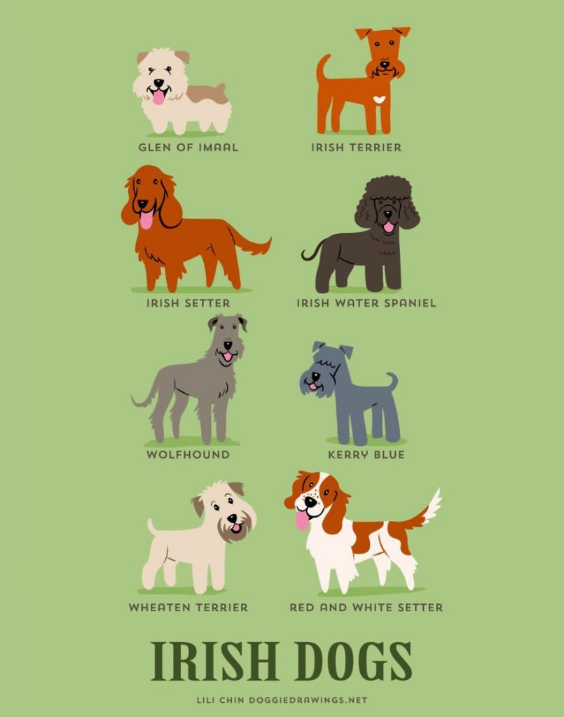 Dogs-Of-The-World-Cute-Poster-Series-Shows-The-Geographic-Origin-Of-Dog-Breeds7__irlanta