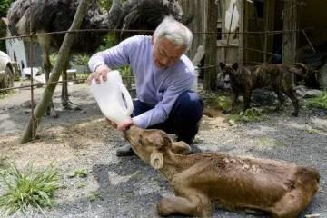 Animales Fukushima