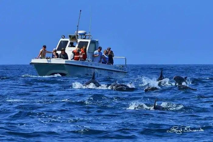 13. World Cetacean Alliance