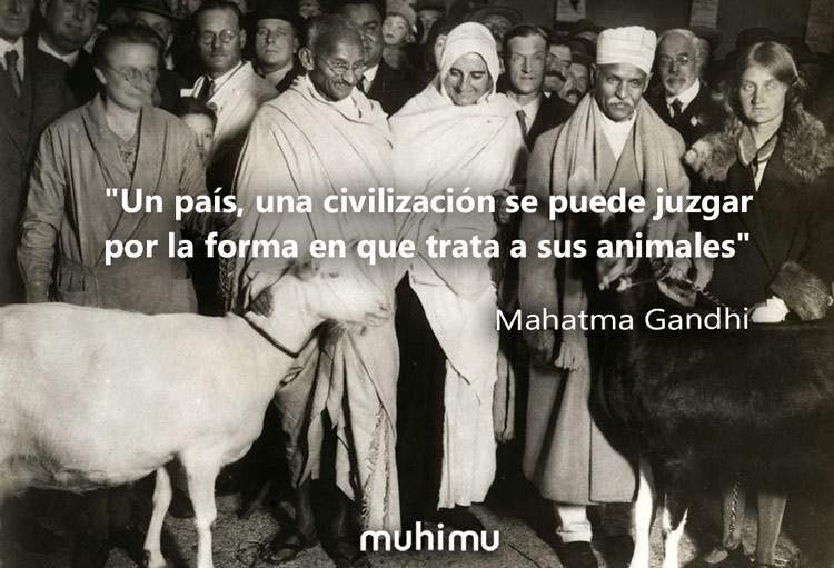 14 Frases De Gandhi El Puñado De Sal Que Cambió El Mundo