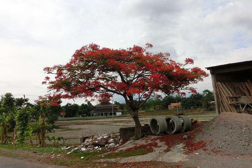Ceribon – Pangandaran
