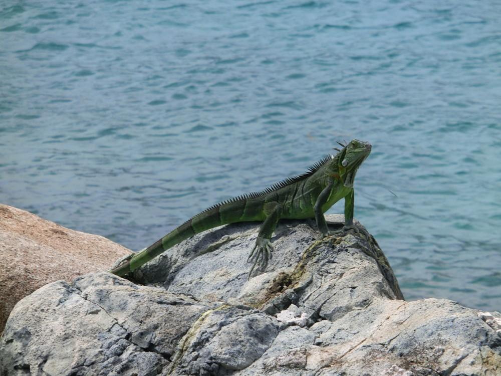 Sint Maarten, Caribische warmte