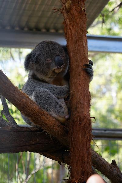 Port Macquarie, Australië