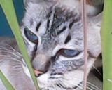 gatos2014 (100)