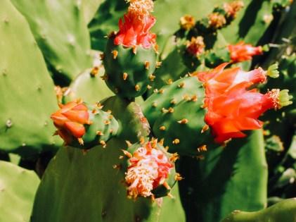 mexique-145-of-148_2272