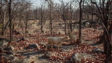 Photo of ONU diz que alterações climáticas matam diariamente em Angola
