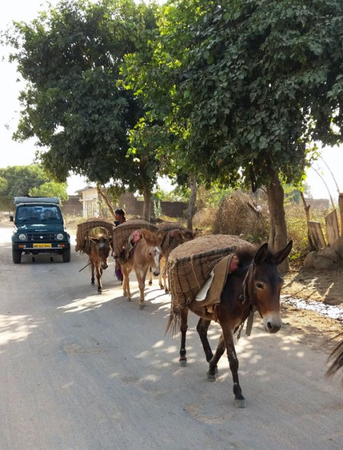 transport de graines de sésame à dos d'âne à Khajuraho