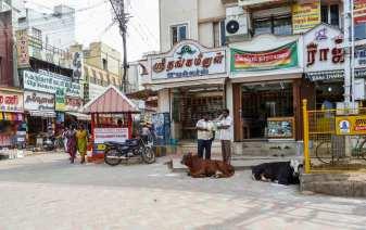Les commerçants et les vaches de Madurai