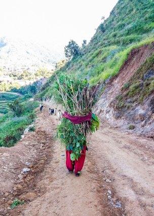 Sentier de Bandipur à Ramkot au Népal