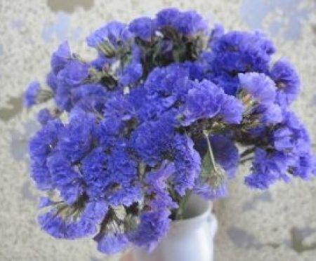 夏に日持ちする花の種類
