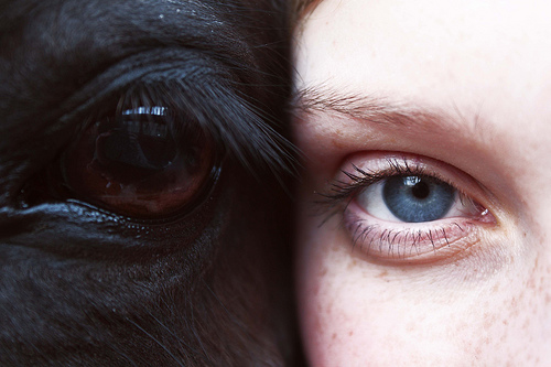 white woman black horse