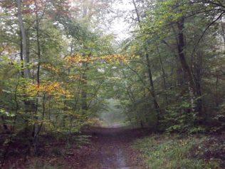 28-10-2016-fontainebleau-par-etienne-lnquetin-003
