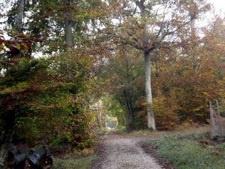 28-10-2016-fontainebleau-par-etienne-lnquetin-049