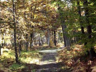 28-10-2016-fontainebleau-par-etienne-lnquetin-080