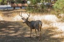 Yosemite fauna
