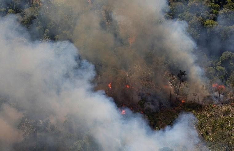 Brasil em chamas: os efeitos da passagem da boiada