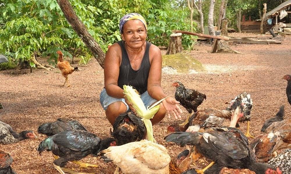 #02 – Brasileiros e a pobreza rural – Combate através de projetos