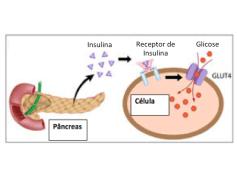 esquema-celula-insulina-receptor-jpg