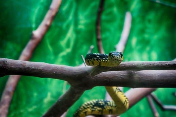 تفسير حلم الثعابين الصغيرة والكبيرة 2021 موقع ملخص