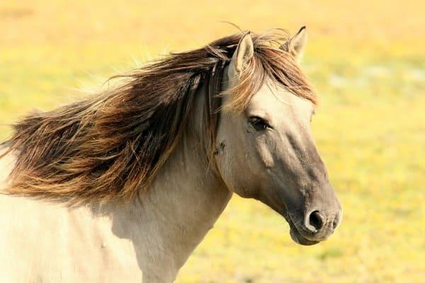 رؤية الحصان في المنام للعزباء 2020 موقع ملخص