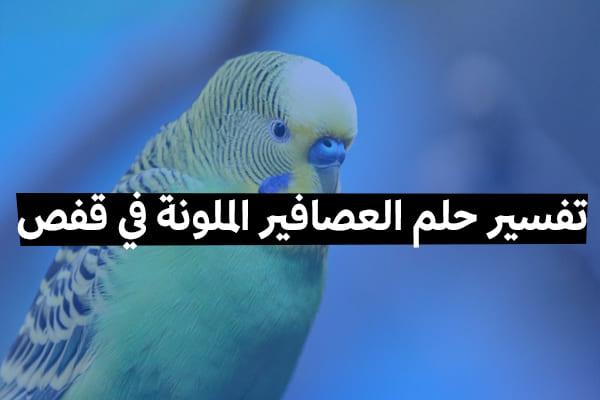 تفسير حلم العصافير الملونة في قفص 2020 موقع ملخص