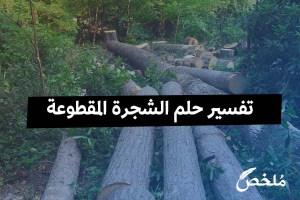 تفسير حلم الشجرة المقطوعة