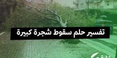 تفسير حلم سقوط شجرة كبيرة