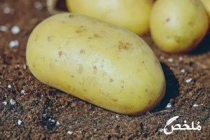 تفسير حلم قلع البطاطا من الارض