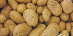 تفسير رؤية شراء البطاطا في المنام