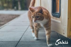 تفسير رؤية قطة صفراء اللون في المنام