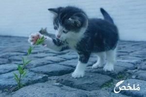 تفسير رؤية القطط والفئران في المنام