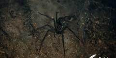 تفسير رؤية العنكبوت الاسود في المنام