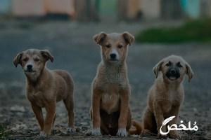 رؤية الكلاب الاليفة في المنام للعزباء