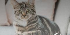 أضرار ديدان القطط على الإنسان
