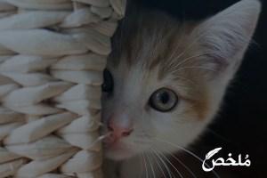 أعراض القطط المريضة