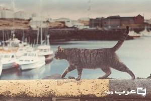 امراض القطط القاتله