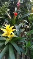 """6"""" Bromeliad"""