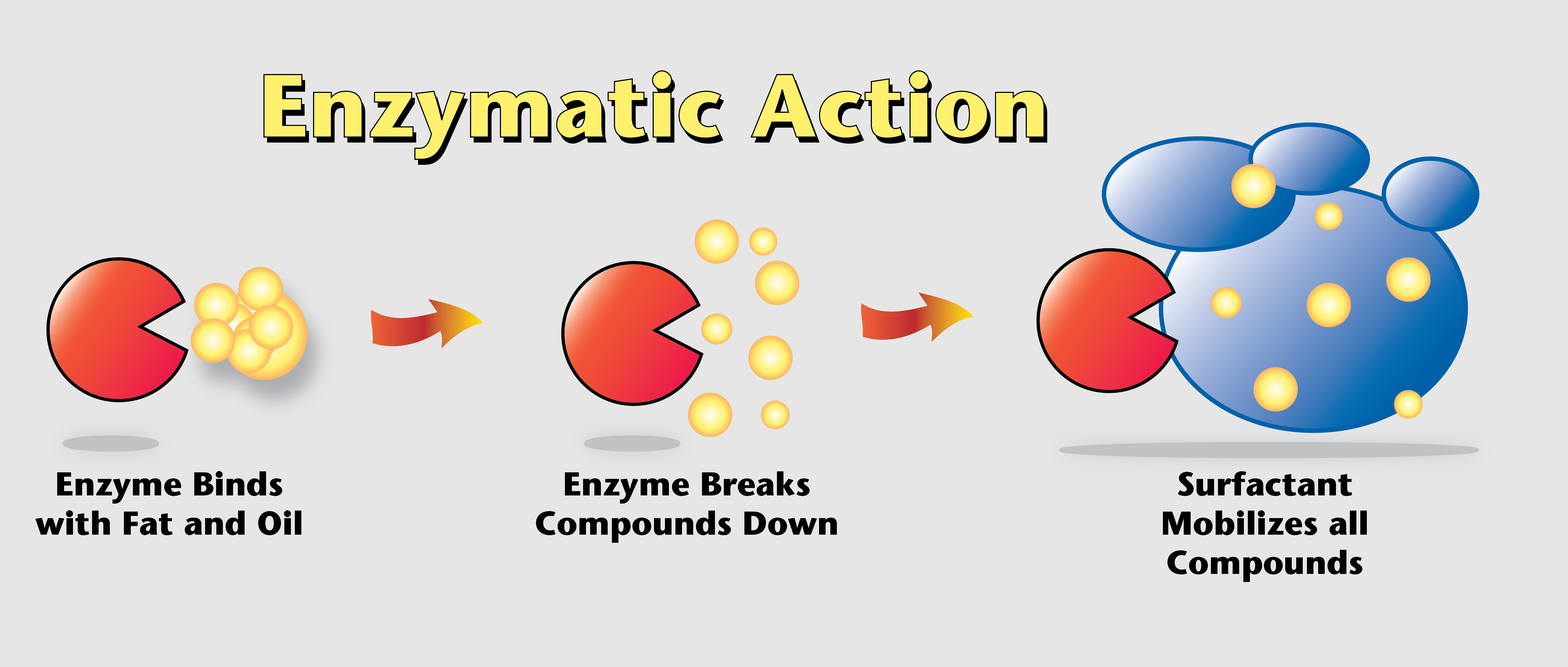 Multi Clean How To Eliminate Odors Using Bio Enzymatic