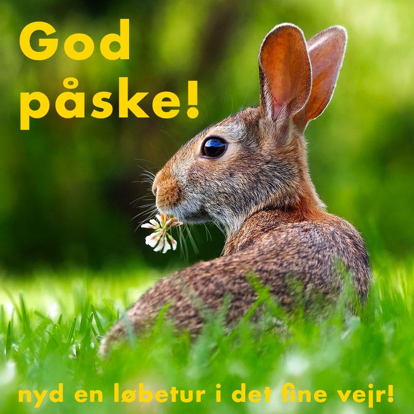 rabbit-1903016_1280-2
