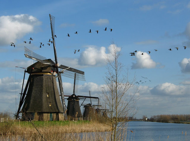 Wiatraki w Kinderdijk, Holandia (Fot. Marta Marakchi © All rights reserved)